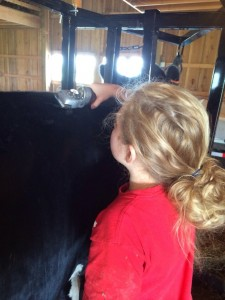 4-H dairy fitting