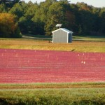 solar power pump house cranberries