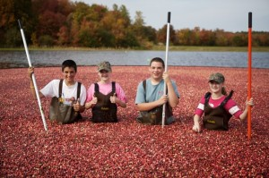 cranberry kids farm bog harvest