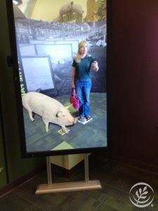 Michele Payn-Knoper Fair Oaks Farm Pig Adventure